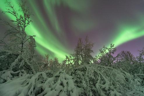 Brilliant aurora on a winter night