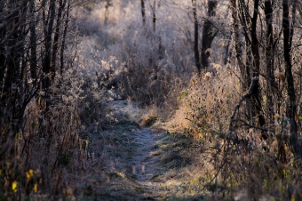 Frost covered forest trail. The sunlight makes the frost covered landscape sparkle like diamonds.